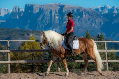 Haflinger horse stable Unterwirt in San Genesio
