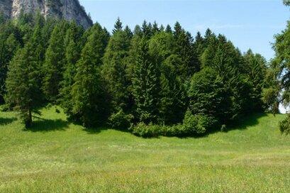 Naturapp Südtirol - Alto Adige
