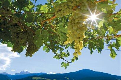Der Weinfuhrmann