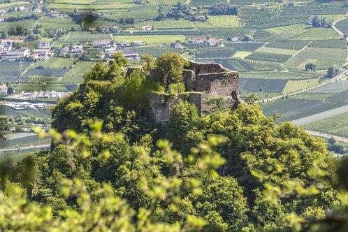 Rodere Castel del Grifo - Castel del Porco